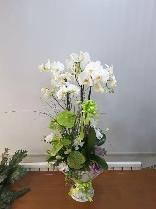 Orkide #001