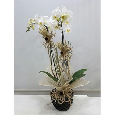 Orkide #0010