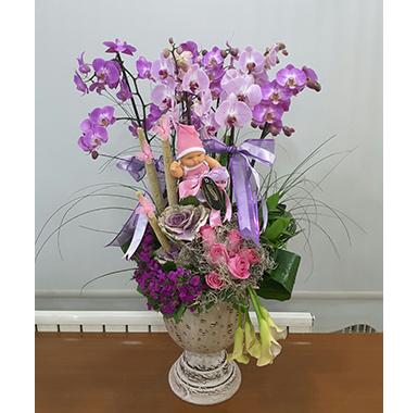 Orkide #0012