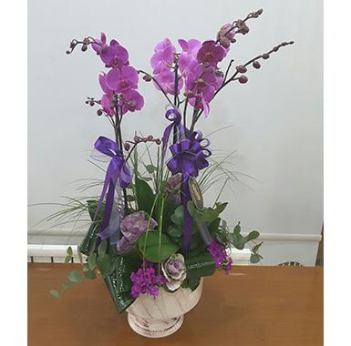 Orkide #0013
