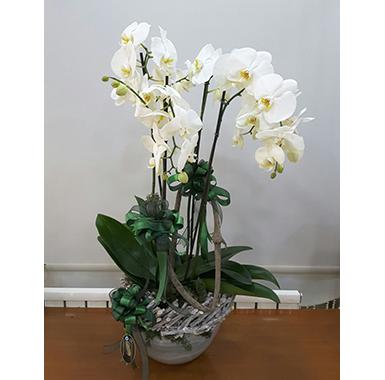 Orkide #0014