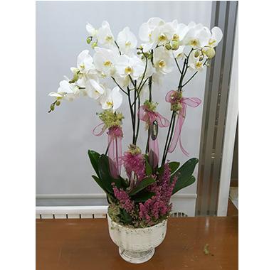 Orkide #0015