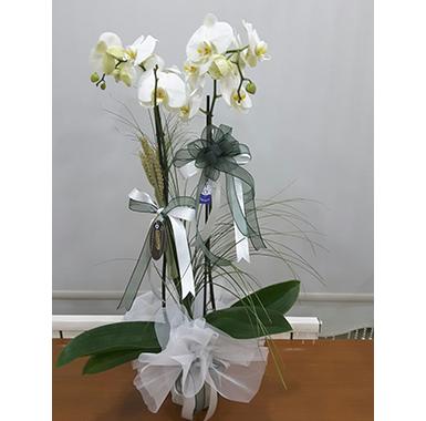 Orkide #0016