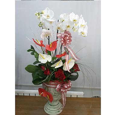 Orkide #0018
