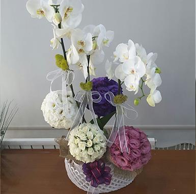 Orkide #003