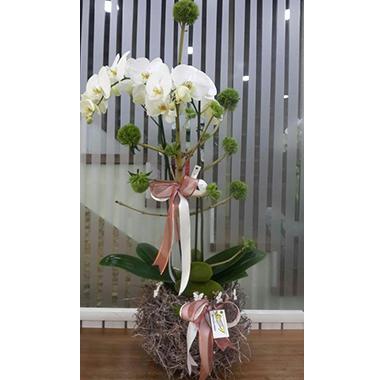 Orkide #0021
