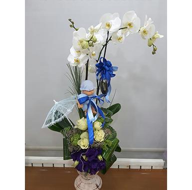 Orkide #0025