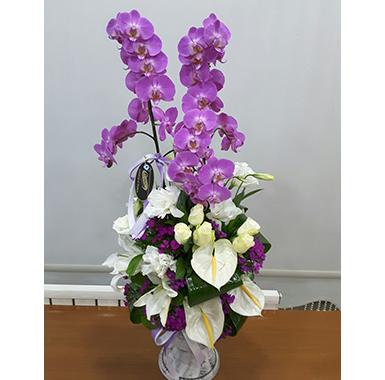 Orkide #0030