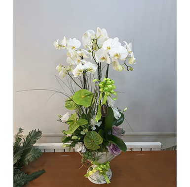 Orkide #0031