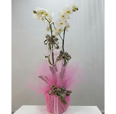 Orkide #0033