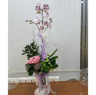 Orkide #0034