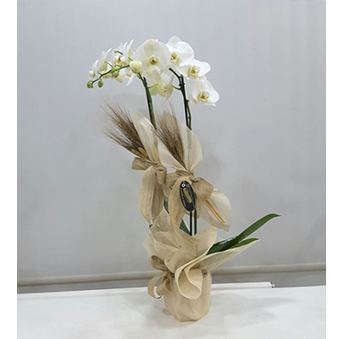 Orkide #0035