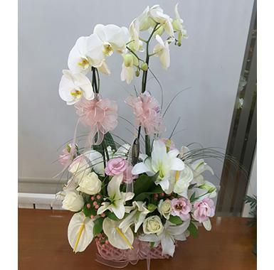 Orkide #0037