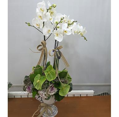 Orkide #0038