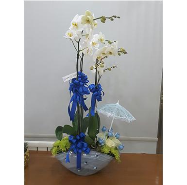 Orkide #0039