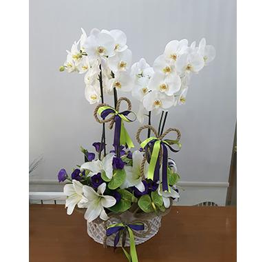 Orkide #0041