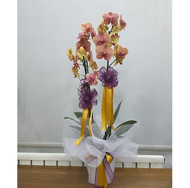 Orkide #0042