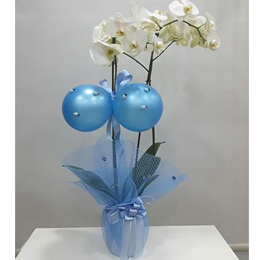 Orkide #005