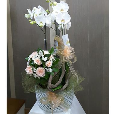 Orkide #006