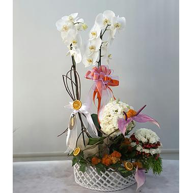 Orkide #008
