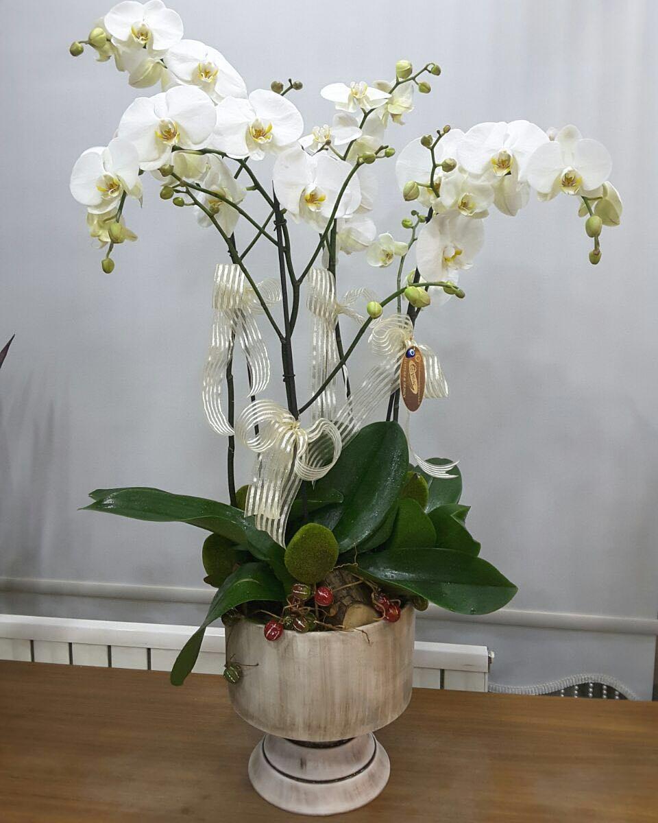 Özel Süslemeli Beyaz Orkide