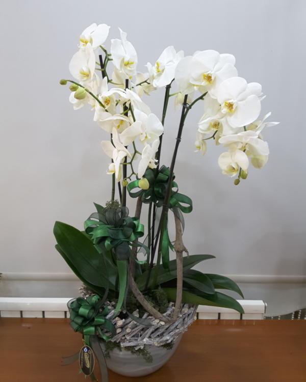 Beyaz Orkide Arajmanı