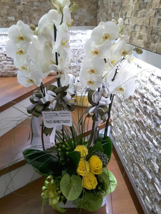 Antoryum Sarı Güller & Orkide