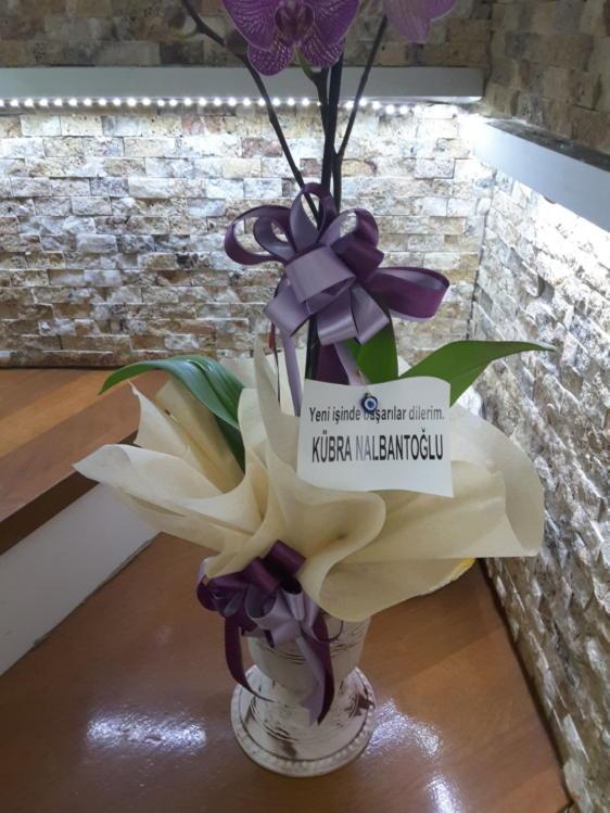 Deluxe Orkide