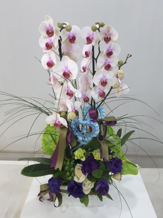 Özel Süslemeli Orkide