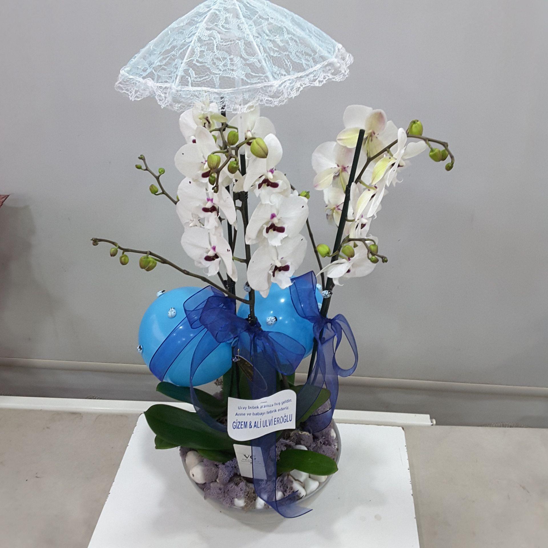 Şemsiye Detaylı Beyaz orkide